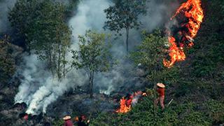 美境内有百余处山火