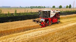 农业农村部:夏粮再获丰收
