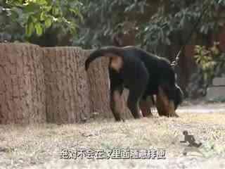 狗狗训练营